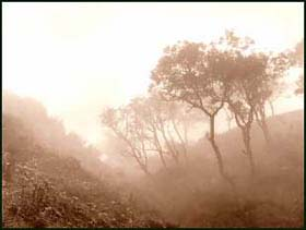`Trees in a Misty Valley' by Frank Meadow Sutcliffe