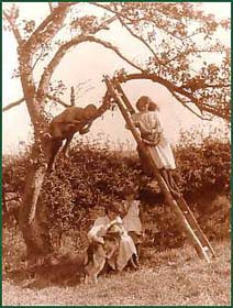 'Children in a Fruit Tree' by Frank Meadow Sutcliffe